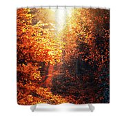 Illuminated Forest Shower Curtain by Wim Lanclus