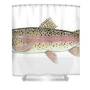 Illustration Of A Rainbow Trout Shower Curtain by Carlyn Iverson