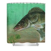 Illustration Of A Walleye Swimming Shower Curtain by Carlyn Iverson