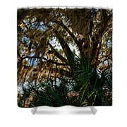 In The Shade Of A Florida Oak Shower Curtain by Christopher Holmes