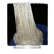 Inaugural Gown Train On Display Shower Curtain by LeeAnn McLaneGoetz McLaneGoetzStudioLLCcom