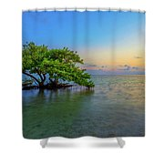 Isolation Shower Curtain by Chad Dutson