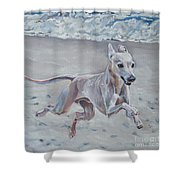 Italian Greyhound On The Beach Shower Curtain by Lee Ann Shepard