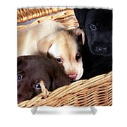 It's A Picnic Shower Curtain by Skip Willits