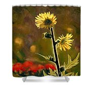 July Afternoon-compass Plant Shower Curtain by Bruce Morrison