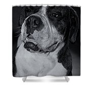 Just Handsome II Shower Curtain by DigiArt Diaries by Vicky B Fuller
