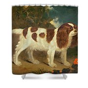 King Charles Spaniel Shower Curtain by William Thompson