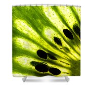 Kiwi Shower Curtain by Gert Lavsen