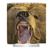 Kodiak Bear Ursus Arctos Middendorffi Shower Curtain by Matthias Breiter