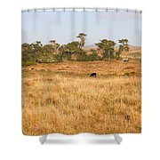 Landscape With Cows Grazing In The Field . 7d9957 Shower Curtain by Wingsdomain Art and Photography