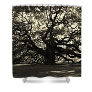 Last Angel Oak 72 Shower Curtain by Susanne Van Hulst