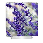 Lavender Blue Shower Curtain by Frank Tschakert