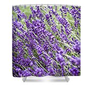 Lavender Shower Curtain by Frank Tschakert