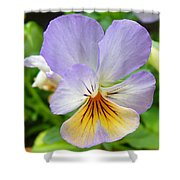 Lavender Pansy Shower Curtain by Nancy Mueller