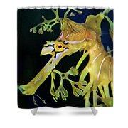 Leafy Sea Dragon Shower Curtain by Mariola Bitner