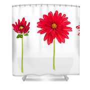 Life And Death Of A Dahlia Shower Curtain by Meirion Matthias