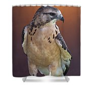 Light Morph Immature Swainsons Hawk Shower Curtain by Ernie Echols