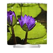 Lilly Buds Shower Curtain by Teresa Mucha