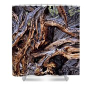 Limber Pine Roots Shower Curtain by Leland D Howard