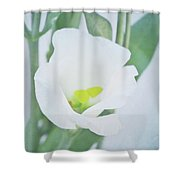 Lisianthus Shower Curtain by Angela Doelling AD DESIGN Photo and PhotoArt