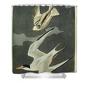 Little Tern Shower Curtain by John James Audubon
