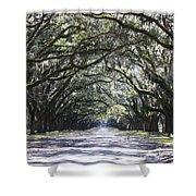 Live Oak Lane In Savannah Shower Curtain by Carol Groenen