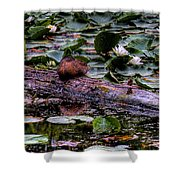 Lone Duck Shower Curtain by David Patterson