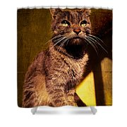 Looking at the Sun Shower Curtain by Loriental Photography