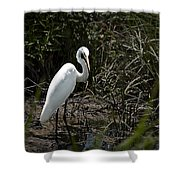 Looking for Lunch Shower Curtain by Tamyra Ayles