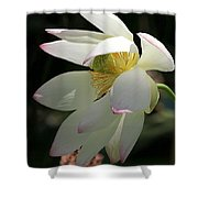 Lotus Under Cover Shower Curtain by Sabrina L Ryan