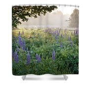 Lupine Field Shower Curtain by Susan Cole Kelly