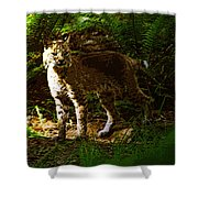 Lynx Rufus Shower Curtain by David Lee Thompson