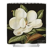 Magnolia Grandiflora Shower Curtain by Jenny Barron