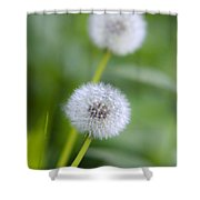 Make A Wish Dandelion Shower Curtain by Christina Rollo