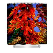 Maple Leaves Shower Curtain by Robert Bales