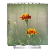 Marigold Fancy Shower Curtain by Kim Hojnacki