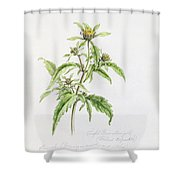 Marigold Shower Curtain by WJ Linton