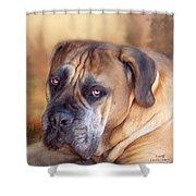 Mastiff Portrait Shower Curtain by Carol Cavalaris