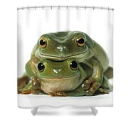 Mating Frogs Shower Curtain by Darwin Wiggett