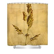 Meadow Grass Shower Curtain by John Edwards
