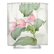 Medinilla Magnifica Shower Curtain by Sarah Creswell