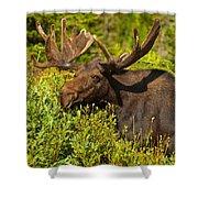 Moose Shower Curtain by Sebastian Musial