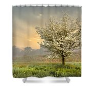Morning Celebration Shower Curtain by Debra and Dave Vanderlaan