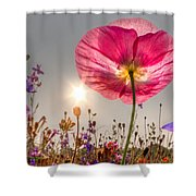 Morning Pink Shower Curtain by Debra and Dave Vanderlaan