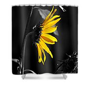 Morning Sun Shower Curtain by Clayton Bruster