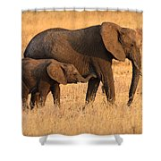 Mother And Baby Elephants Shower Curtain by Adam Romanowicz