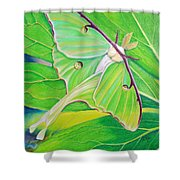 Must Be Dreaming Shower Curtain by Amy Tyler