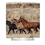 Mustang Trio Shower Curtain by Mike  Dawson