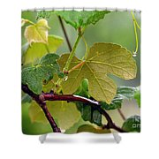 My Grapvine Shower Curtain by Robert Meanor