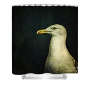 Naujaq Shower Curtain by Priska Wettstein